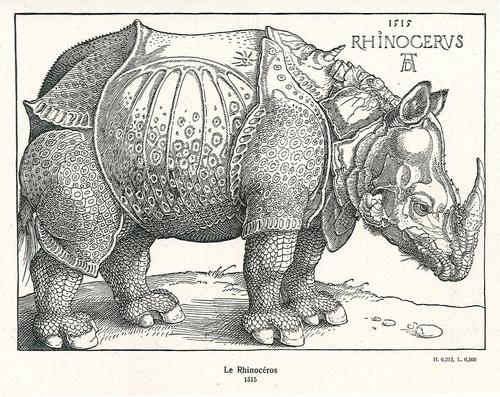 Rhino-Durer_0006-vignette